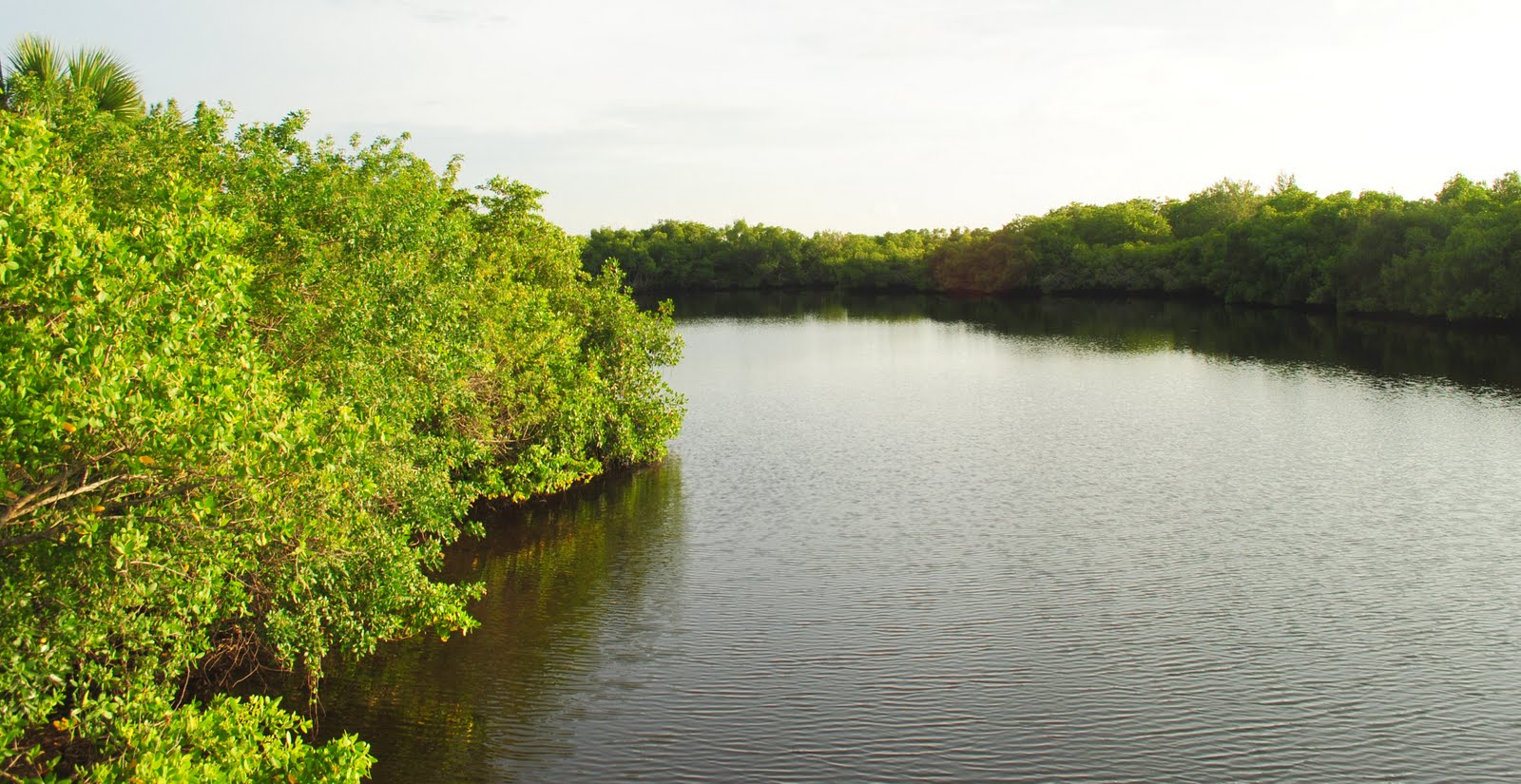 Field Notes And Photos Mangroves Southwest Floridas