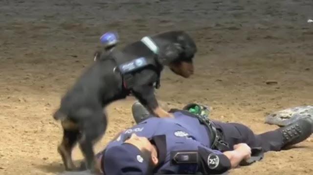 Робив масаж серця: цуценя спробувало врятувати поліцейського і стало зіркою мережі