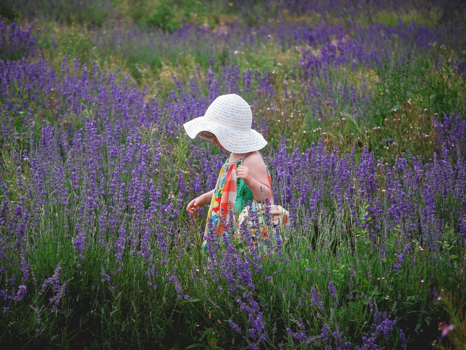 Lavender Fields | Weekend Adventuring - Very Much So