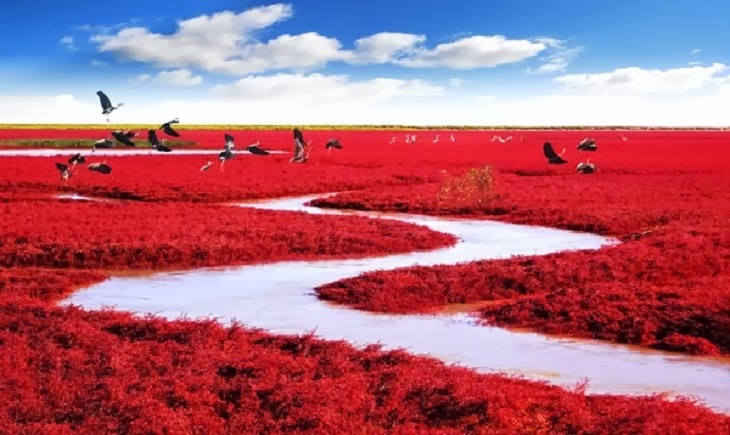 Red Seabeach, Panjin, China. - Top 10 Unusual Natural Wonders