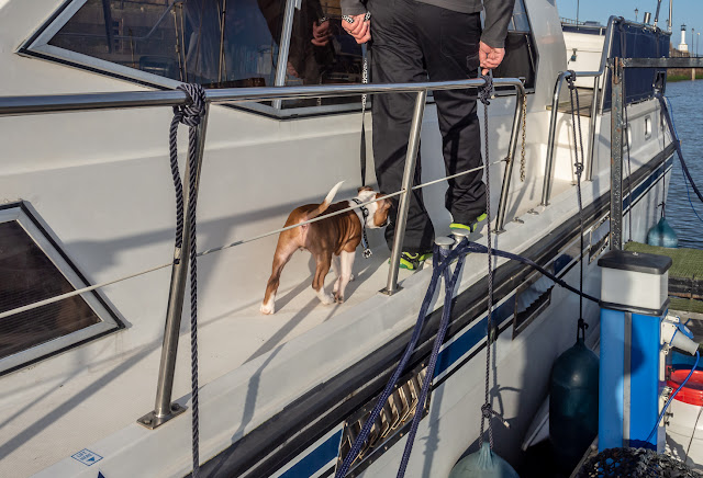 Photo of Ruby following Phil around to the aft deck