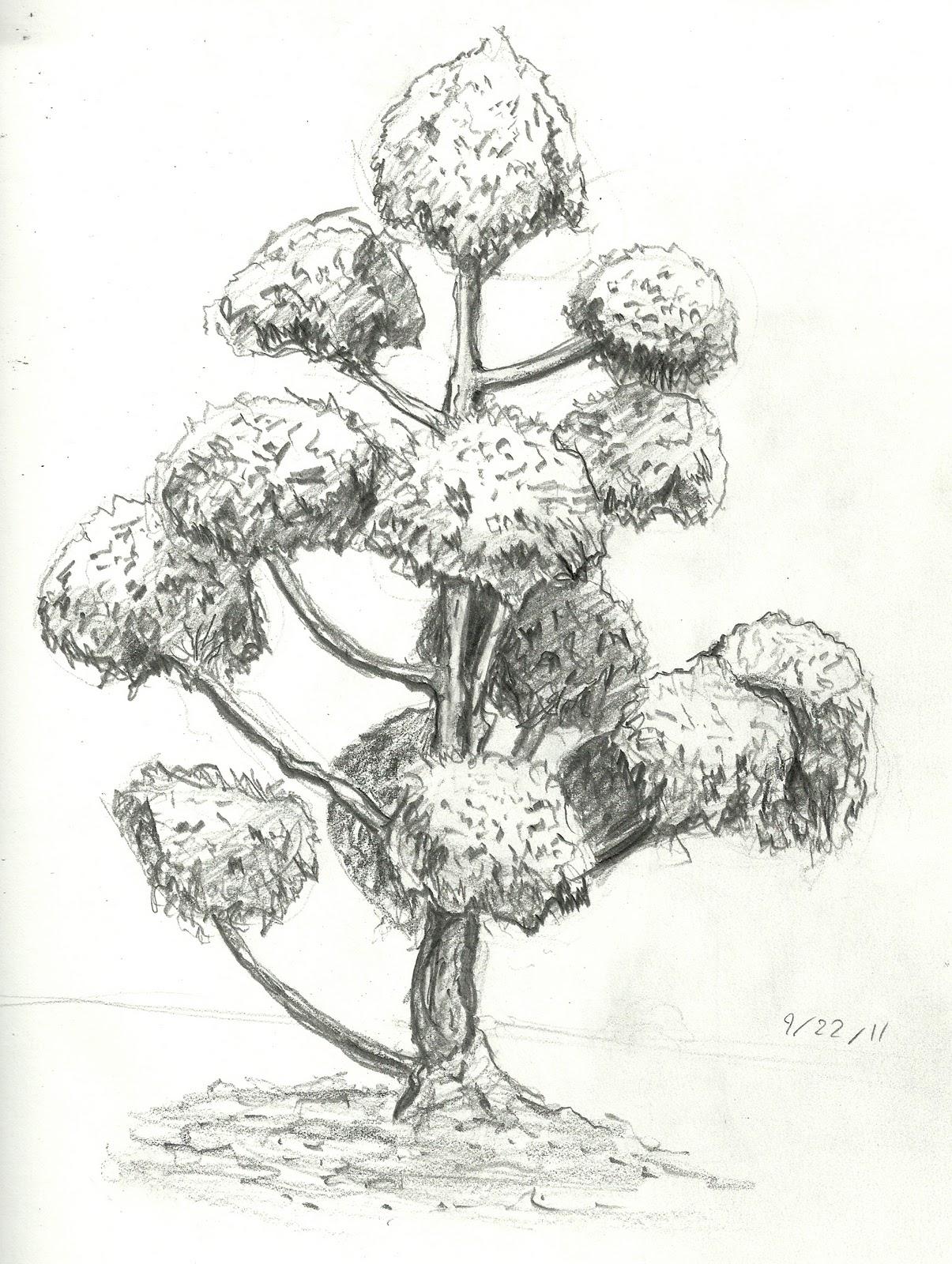Brandon Orden Tree Drawings