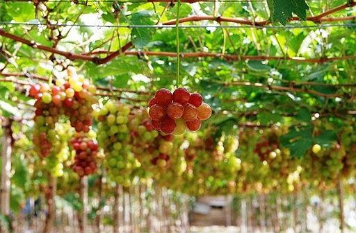 Kết quả hình ảnh cho Vườn cây ăn trái miền Tây