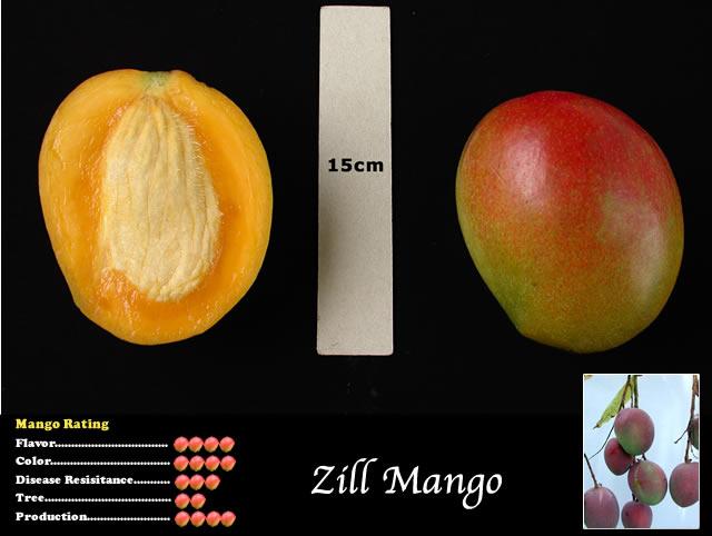 Mango Farms In South Florida – Wonderful Image Gallery