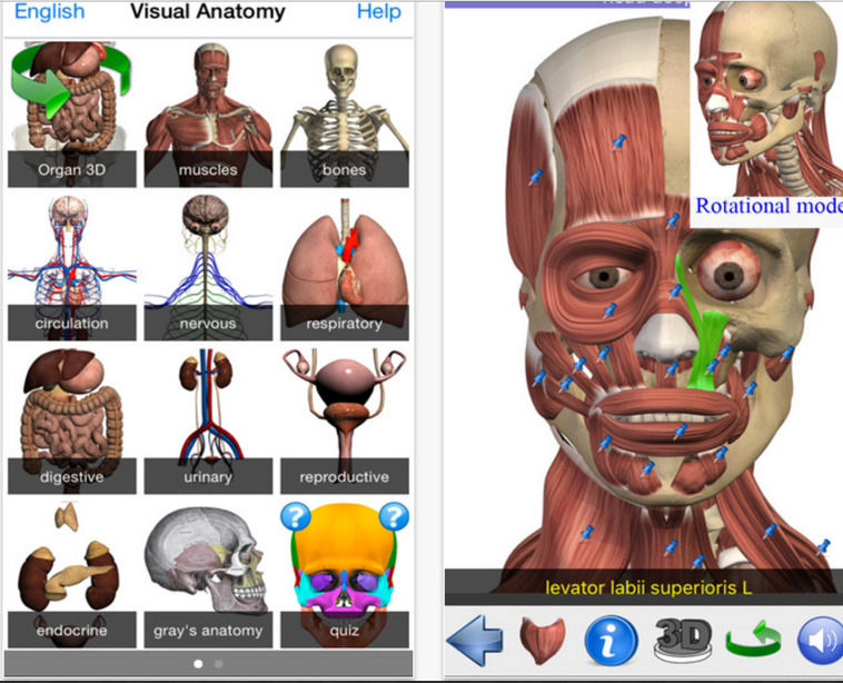 The Popular Visual Anatomy App Is Free Today Grab It Educational