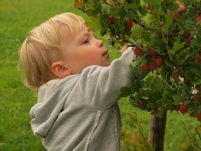 gizi, kesehatan anak, makanan anak, nutrisi, vitamin, vitamin anak, vitamin anak susah makan,