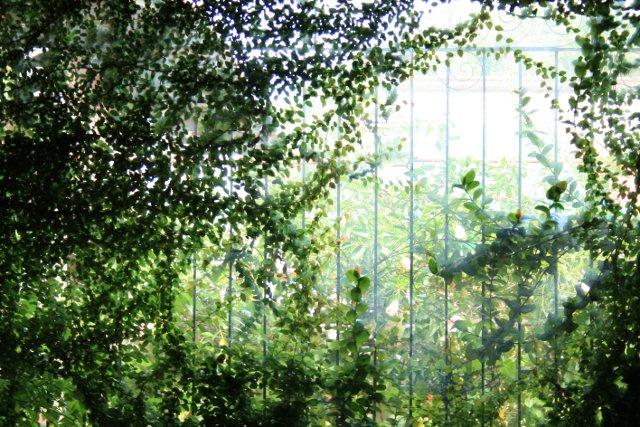 secret garden photo by nephithyrion