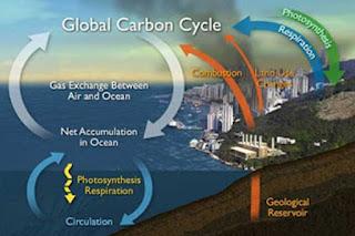 Peningkatan KARBON DIOKSIDA di Samudera, Trend Peningkatan, Karbon berputar di Samudera, Perubahan Iklim dan Masa Depan dan Pengasaman laut.