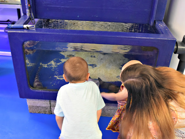 Behind The Scenes at National Sea Life Birmingham