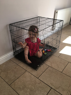 toddler playing dog cage sophie