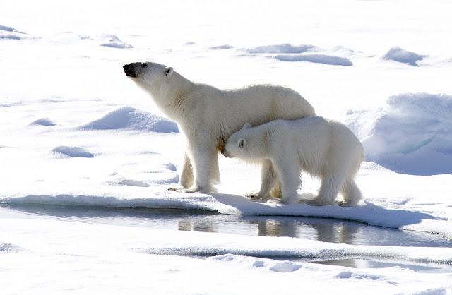 Dampak Pemanasan Global - Terjadinya perubahan pola hidup binatang dan juga tumbuhan