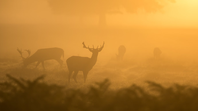 Wallpaper: Deer Silhouettes