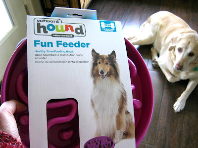 Daisy is a bit suspicious of her new  Outward Hound Fun Feeder slow-feeding dog bowl.