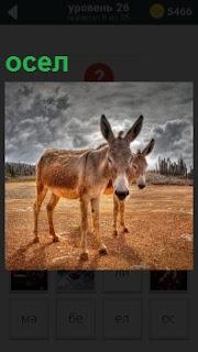 На фоне мрачного пасмурного неба на земле в поле стоят два осла, один осел маленький