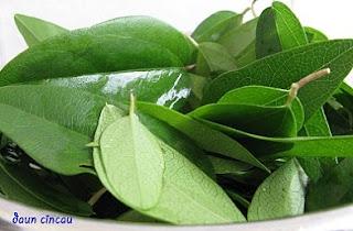 cara masak daun cincau,cara pengolahan daun cincau hijau,cara membuat cincau hijau dengan blender,cara pembuatan cincau hijau,cara membuat cincau hijau agar kenyal,