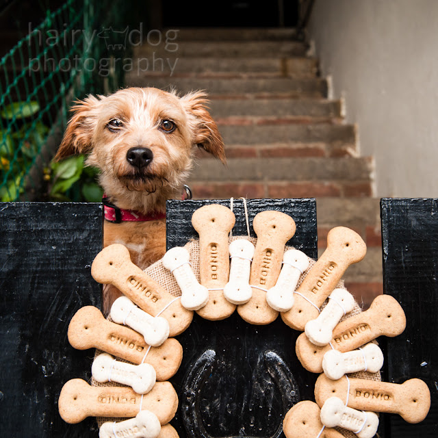 Bonio ring and terrier by Jamie Emerson, Aberdeen dog photographer