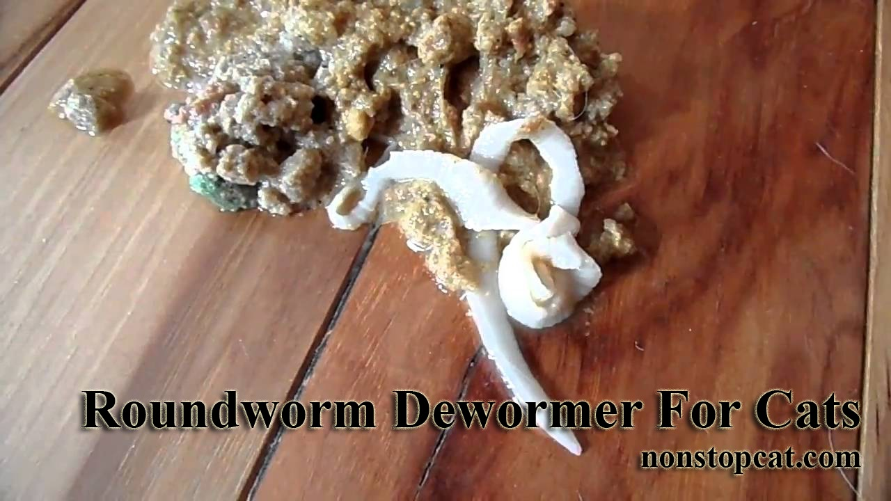 Roundworm Dewormer For Cats
