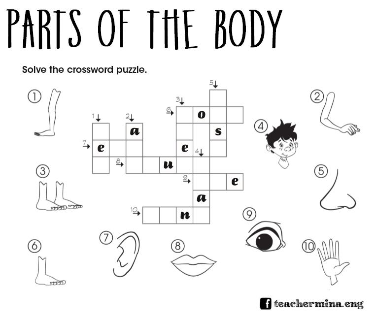 Teachermina: [activities] parts of the body