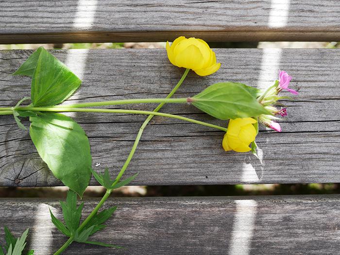 Mittsommer Blumenkranz Step 2