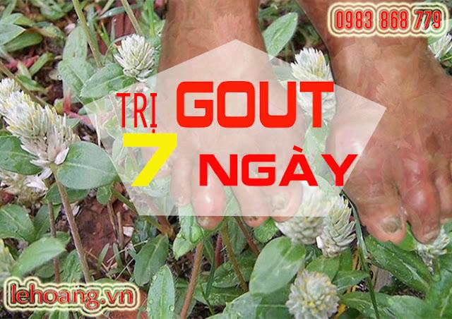 Cây nở ngày đất thần dược trị Gout trong 7 ngày