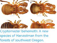 http://sciencythoughts.blogspot.co.uk/2016/07/cryptomaster-behemoth-new-species-of.html