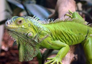Reptiles en Permacultra