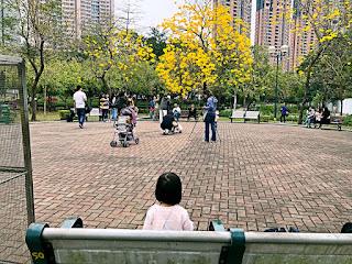 可以一邊野餐,一邊賞花,是不錯的親子好去處。