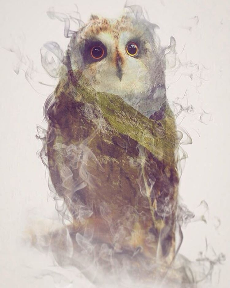 05-Owl-Daniel-Taylor-Ghostly-Animals-in-Manipulated-Photographs-www-designstack-co
