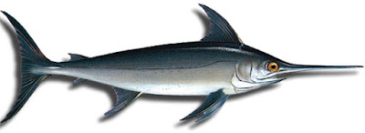 Foto de un bello pez espada de perfil