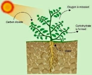 Get to know about Nutrition in Plants (Ncert / Cbse Solutions & Revision Notes), Chapter Summary\, CBSE / NCERT Revision Notes, CBSE NCERT Class VI (7th) | Science, CBSE NCERT Solved Question Answer, CBSE NCERT Solution.