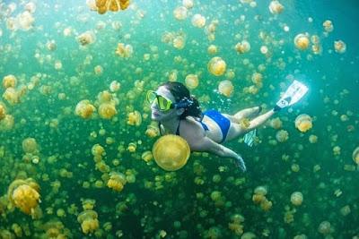 Berenang Dengan Ubur-ubur danau kakaban