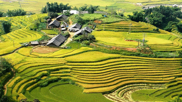Sapas terraced fields one of the seven most magnificent terraced fields