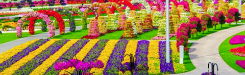 Garden miracle: largest flower garden in the natural world