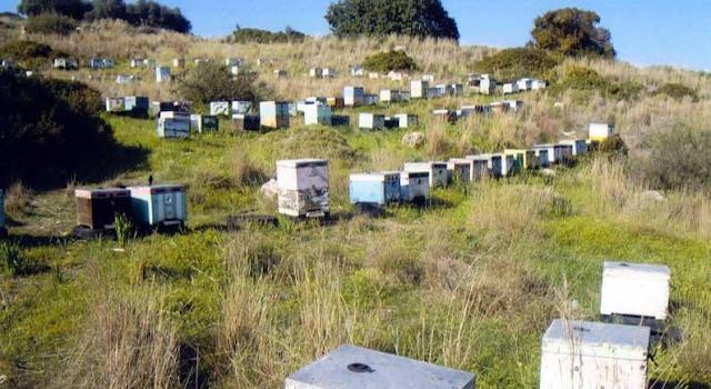 Κακές χρονιά - περισσότερα μέλια. Πως τα καταφέρνουν μερικοί μελισσοκόμοι όταν κανένας δεν είχε παραγωγή;
