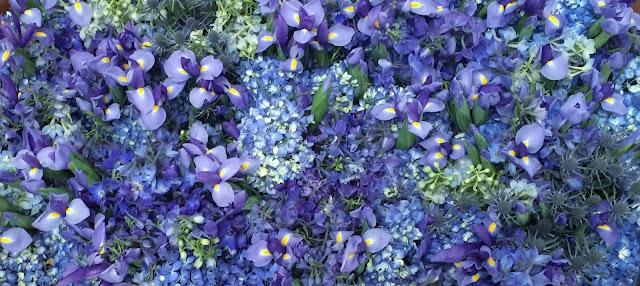 Blue flowers of iris hydrangea delphinium eryngium