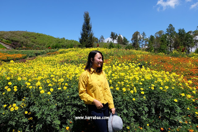 taman bunga sapo juma tongging danau toba
