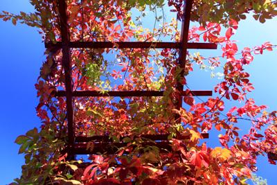 5f0dadf626d54 Odkryłam za to nowe hobby: patrzenie w niebo, które płonie czerwienią. A  dużo czerwieni tej jesieni:)
