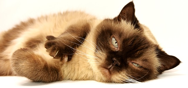 Treat your cat from unhealthy breathing
