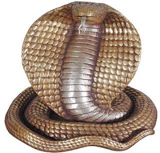 Otto serpenti più velenosi del mondo