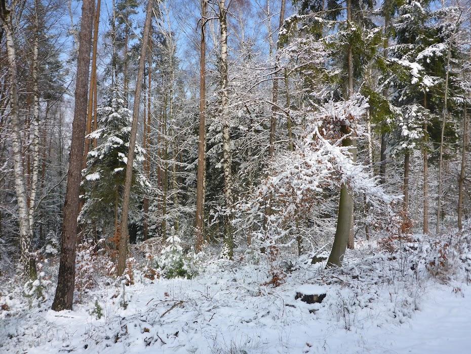 Зима, лес, снег