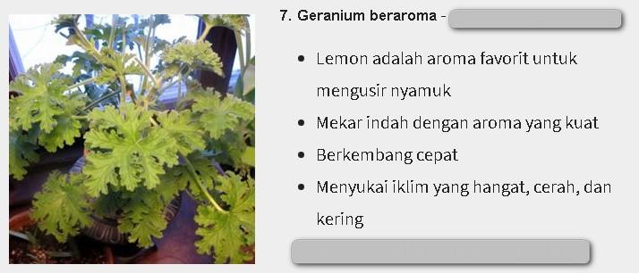 Bunga Geranium adalah