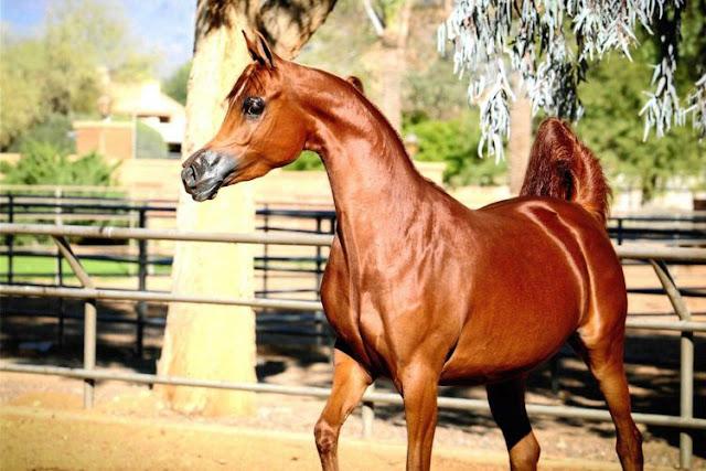 Ini Penampakan Kuda Spesies Baru Hasil Pembiakan