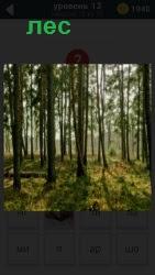 в лесу стоят деревья и еле пробивается солнечный луч