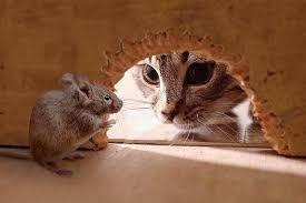Cara Mudah Mengusir Rayap, Tikus, dan Tokek, dari Rumah