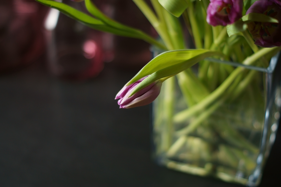 Blog + Fotografie by it's me! - fim.works - Blüte einer lilafarbenen Tulpe