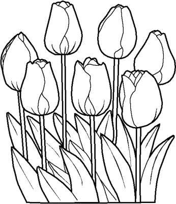 20 Desenhos De Flores Para Colorir Pintar Espaco Educar