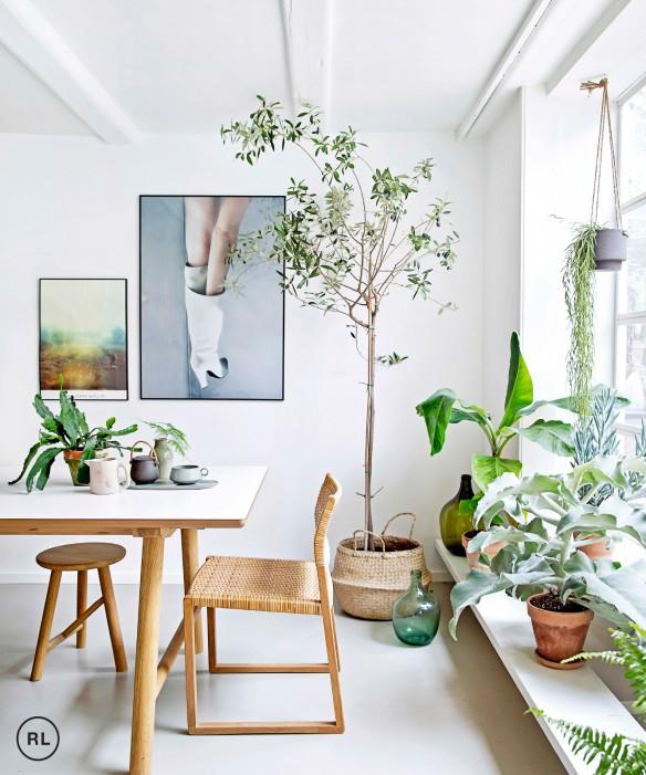 Plantas para mejorar el ánimo