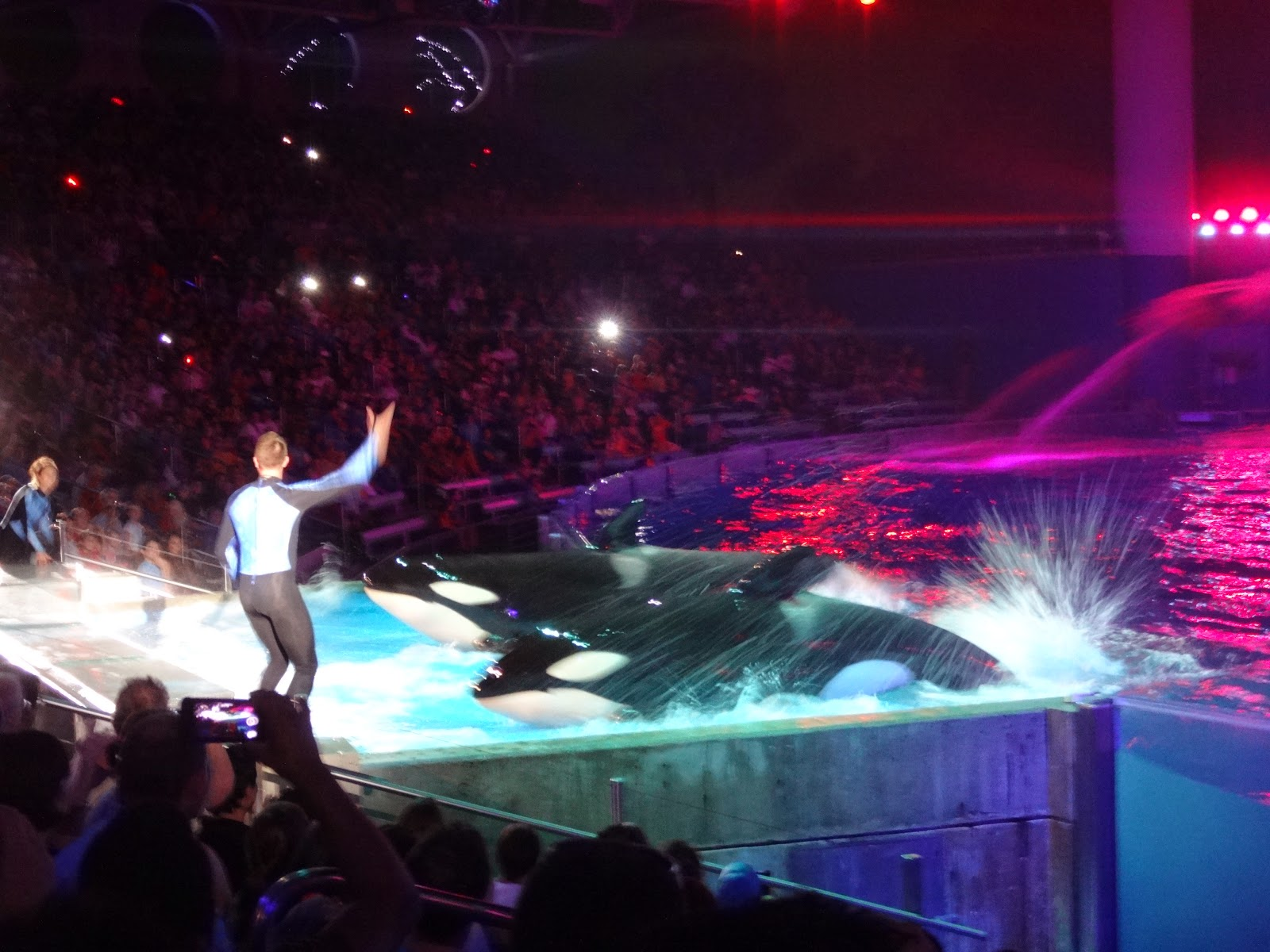 shamu - miracles - parque sea world - orlando, florida