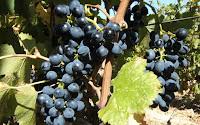 Incoming di operatori svizzeri del food and wine