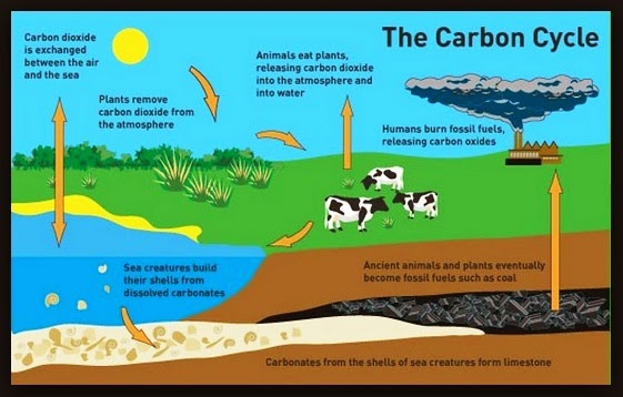 Thoughts To Promote Positive Action     The Carbon Cycle